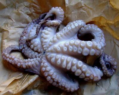 Εικόνα: Octopus by XcBike